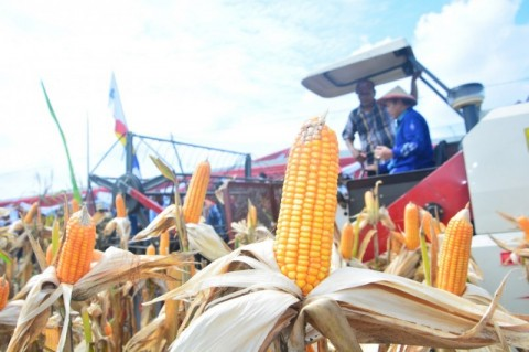 Legislator Pertanyakan Surplus Jagung