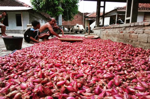 Harga Bawang Merah Lebih Murah dari Biaya Produksi