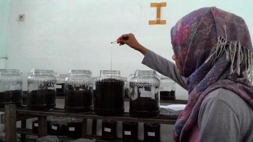 Kegiatan di laboratorium, saat mengembangkan limbah rumah potong