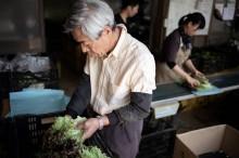 Jepang Serius Buka Lowongan untuk Tenaga Kerja Asing