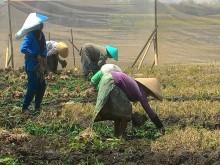 Lima Desa di Brebes Terpapar Residu Obat Kimia