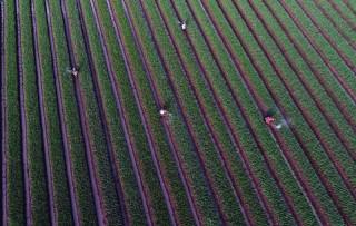Ekspor Sektor Pertanian Meningkat 5,46 Persen pada September