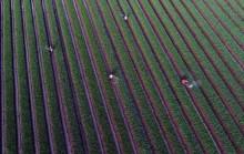 Jatam Sarankan Ada Evaluasi Luas Lahan Pertanian