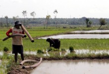 Petani Lebak Ditargetkan Tanam Padi 43 Ribu Ha
