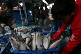 Konsumsi Pangan Ikan Terus Meningkat