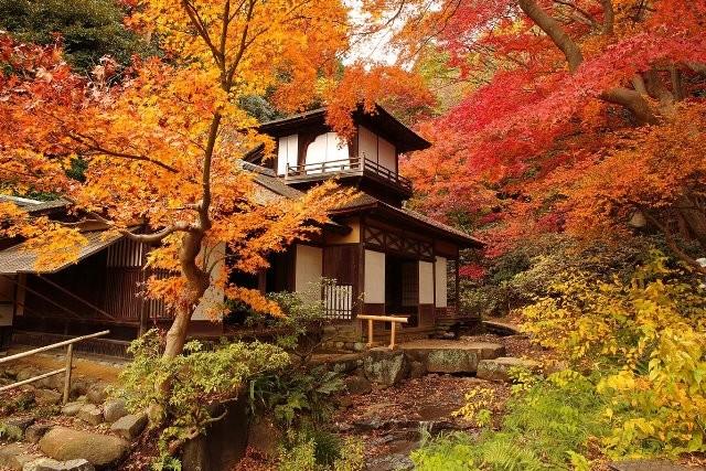 Salah satu keindahan Momiji Sankeien di musim gugur di perfektur Kanagawa, Jepang (Foto: Dok. Vector Indonesia)