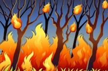Hutan di Gunung Lemongan Lumajang Terbakar