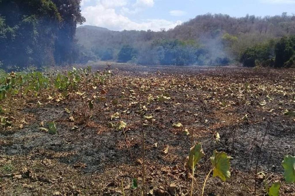 Danau lotus terbesar kedua di dunia di Manggarai Timur, NTT, terbakar, Kamis 1 November 2018, MI - John Lewar
