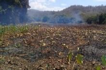 Danau Lotus Terbesar Kedua di Dunia Terbakar