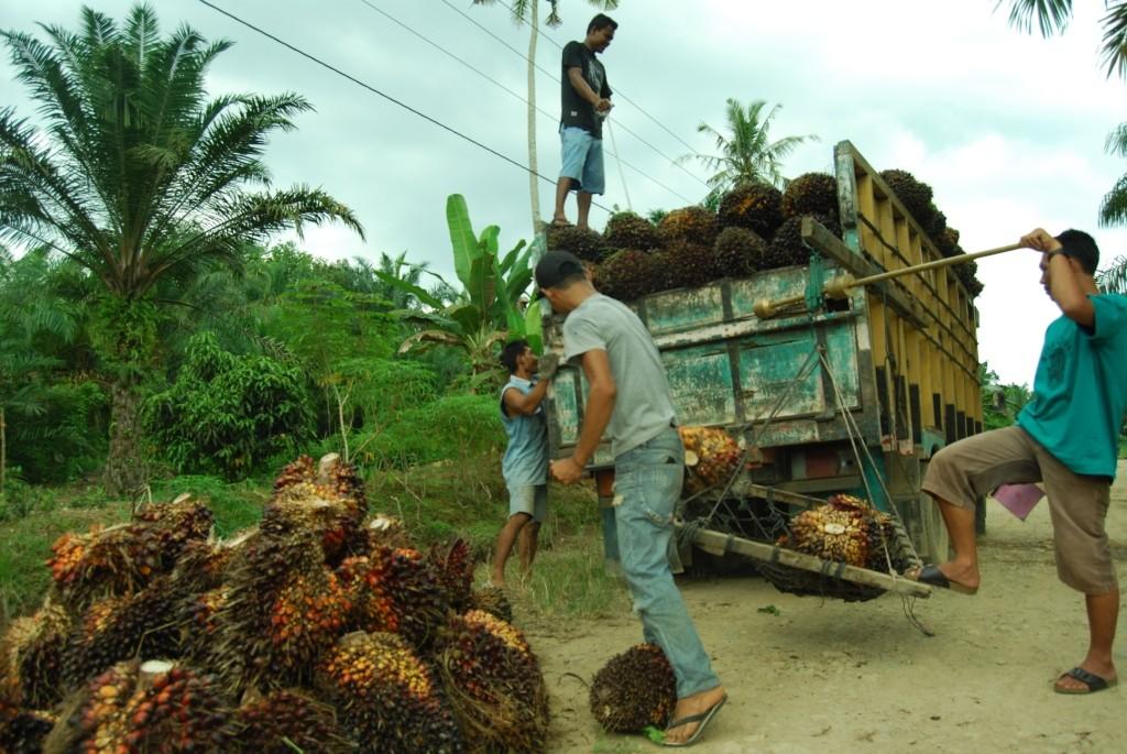 Ilustrasi kebun sawit. (FOTO: MI/Amiruddin Abdullah)