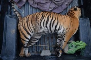 WWF Serukan Setop Perdagangan Satwa Dilindungi