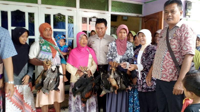 Warga menunjukkan ayam bantuan pemerintah untuk program Bedah Kemiskinan Rakyat Sejahtera di Brebes, Jawa Tengah. (Medcom.id/Kuntoro Tayubi).