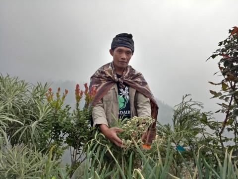 Dua Desa Jadi Role Model Budi Daya Edelweis