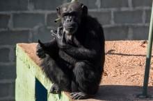 Diculik Monyet, Bayi 12 Hari Ditemukan Tewas
