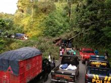 Jalur Malang-Lumajang Lumpuh karena Pohon Tumbang