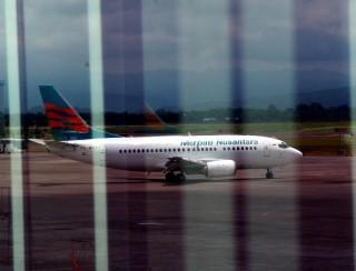 Ingin Terbang, Merpati hanya Bisa Main di Timur Indonesia