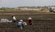 Upah Harian Buruh Tani hanya Naik 0,31%