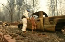 Korban Hilang Kebakaran California Melonjak jadi 631