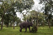 India Resmikan Rumah Sakit Khusus Gajah