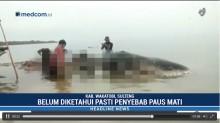 5,9 Kg Sampah Plastik Ditemukan di Perut Ikan Paus Terdampar