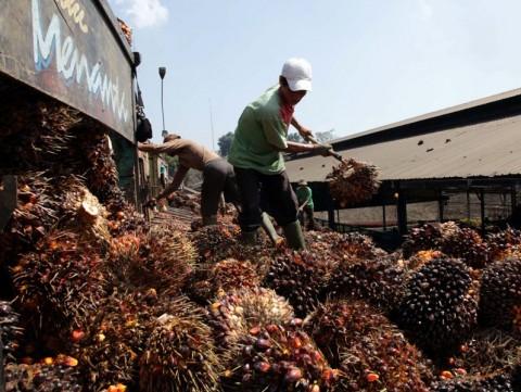 India Investasi Pabrik CPO Rp5 Triliun di Bengkulu