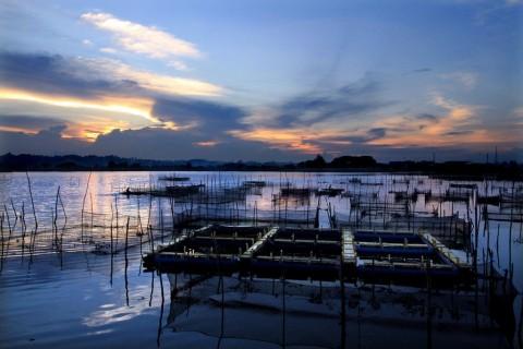 KJA Berpotensi Genjot Produksi Ikan Nasional