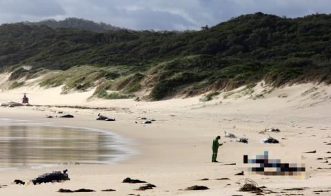 28 Paus Ditemukan Mati di Pantai Australia
