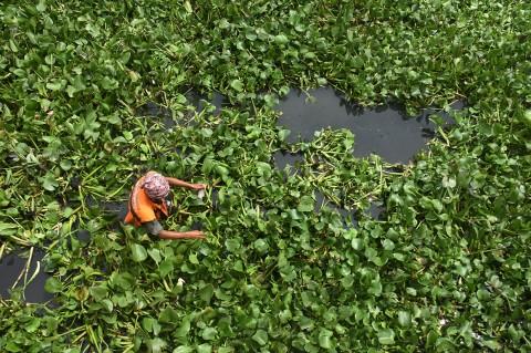 Pemkot Jakut Tanam Eceng Gondok untuk Naturalisasi Sungai