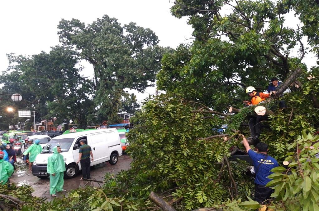 Petugas menangani pohon yang tumbang di kawasan Bogor Selatan, Kamis 6 Desember 2018, Medcom.id - Rizki Dewantara