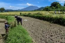 Indonesia Kirim Tenaga Ahli Pertanian ke Myanmar