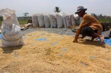 Petani Merasakan Upaya Pemenuhan HAM oleh Jokowi