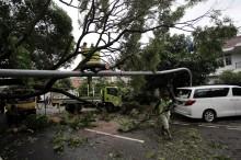 57 Ribu Pohon di Jakarta Dipangkas