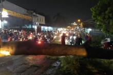 Pohon Akasia Bikin Macet Lalu Lintas di Depok