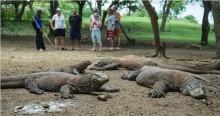 Tarif Masuk ke Taman Nasional Komodo Dinaikkan