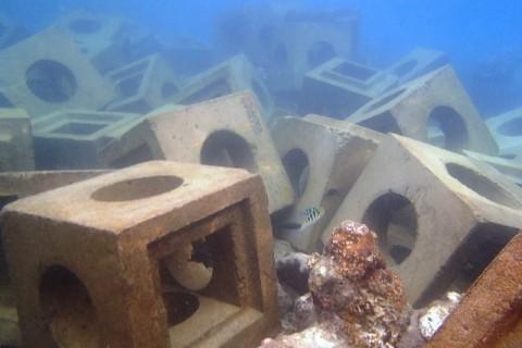 Proyek Pemecah Ombak Merusak Trumbu Karang Pulau Tidung