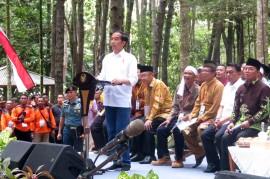 Jokowi Serahkan SK Perhutanan Sosial di Jambi