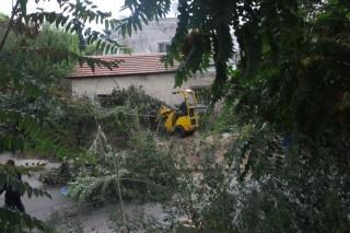 100 Pohon Petani Palestina Dihancurkan Pemukim Israel