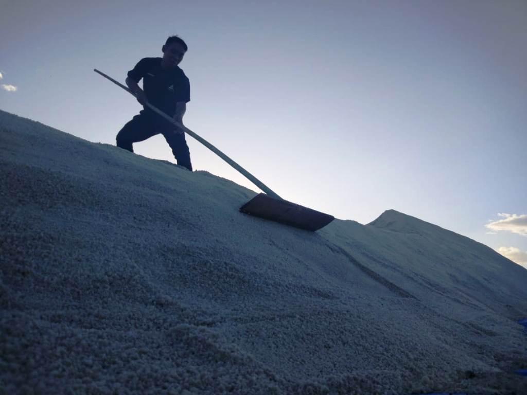 Ilustrasi petani garam. (FOTO: Medcom.id/Annisa Ayu)