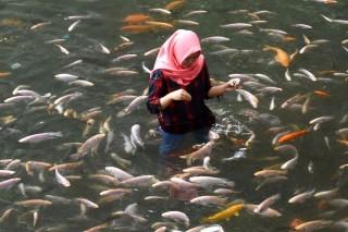 Kunjungi Destinasi Wisata Mata Air Umbul Senjoyo