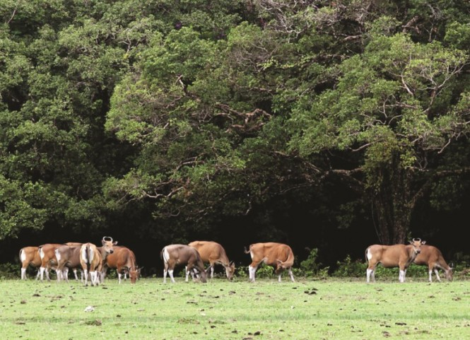 Taman Nasional Ujung Kulon. (FOTO: MI/Panca Syurkani)