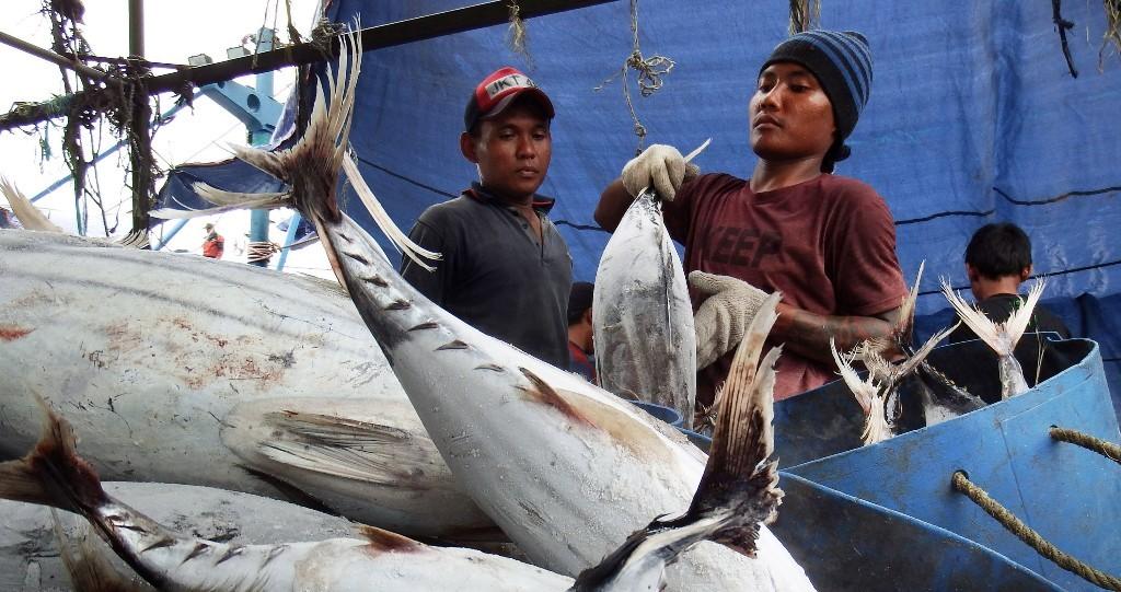 Dua nelayan memasukkan ikan hasil tangkapannya ke dalam drum di Pelabuhan Muara Baru, Jakarta, Kamis (30/10/2014). Foto: Antara/Muhammad Ifdhal