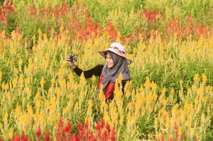Berkunjung ke Taman Bunga Celosia di Aceh Jaya