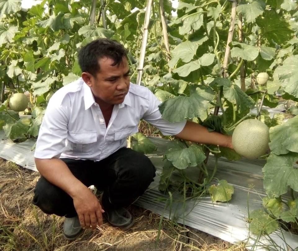Dismo, petani bawang merah yang sukses kembangkan melon di Brebes, Jawa Tengah, Kamis, 10 Januari 2019. (Medcom.id/Kuntoro Tayubi).
