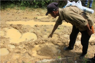 Gajah Rusak Tiga Rumah di Nagan Raya