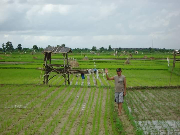 Zaini menunjukkan tanaman padinya. Medcom.id / Rahmatullah