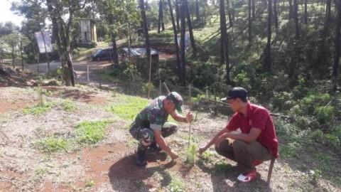 Antisipasi Longsor, Ribuan Pinus Ditanam di Gunung Salem