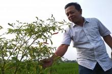 Petani Gandeng Perusahaan untuk Pertahankan Lahan Pertanian