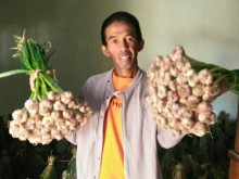 Liku-Liku Petani Bawang Putih Karanganyar Kejar Mimpi Swasembada