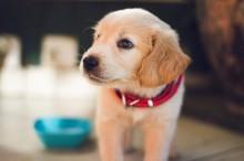 Jangan Lakukan 5 Hal Ini pada Anjing Anda