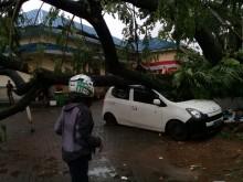Pohon Tumbang Timpa Tujuh Mobil dan Rusak Satu Rumah